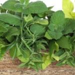 Planting an Herb Box