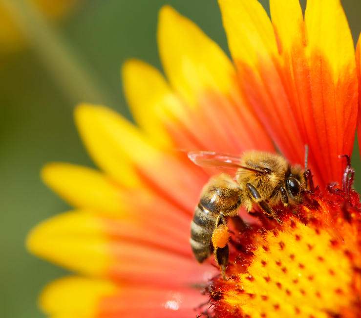 Thousands of Bees Carelessly Killed