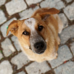 Taking a Stray Dog to the Shelter Broke My Heart