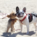 Sizing Up Your Pooch: Buying a Harness Online is Ruff