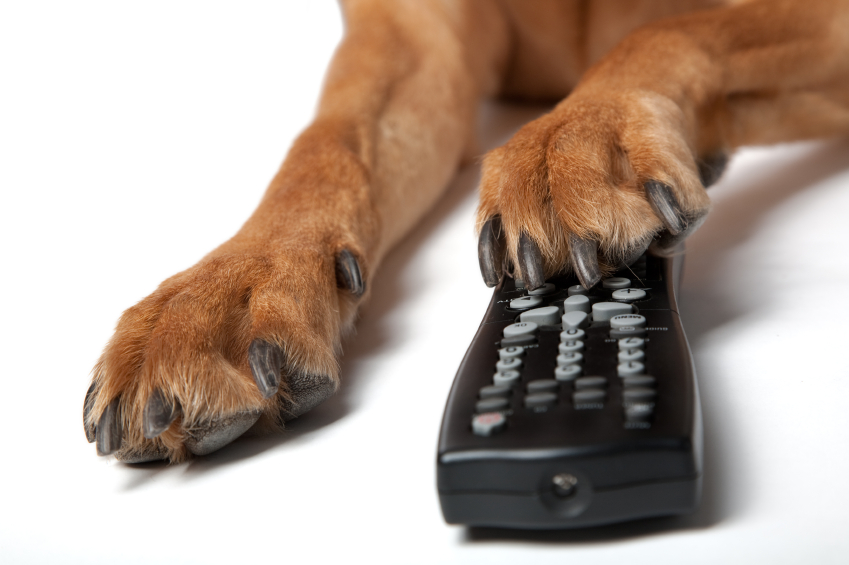 Press Paws: Experts Say Dogs Won't Dig Dog TV