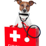 Top 10 Pet Emergency Kit Items