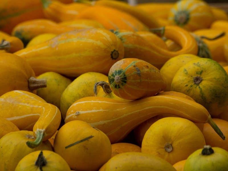 Awesome Autumn Squash