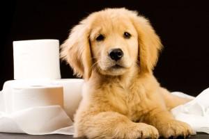puppypottytraining