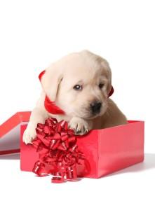 puppypresent