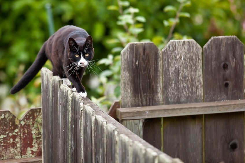 Paws Off: Keeping Stray Cats Away Naturally
