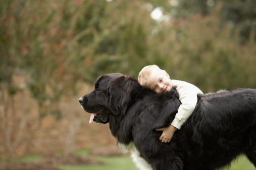 Best Dog Breeds For Young Kids Weekly Sauce