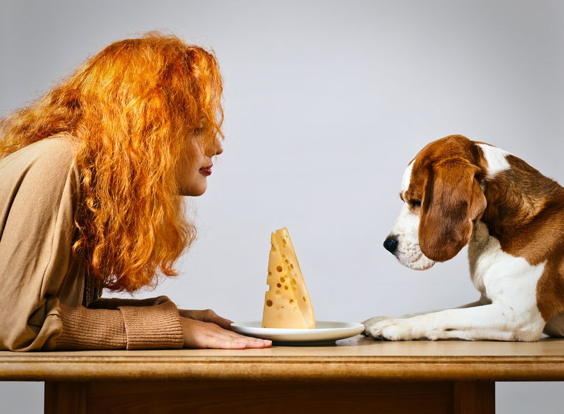 Dog and woman looking at a plate of cheese