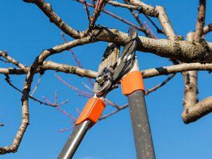 tree_trim107